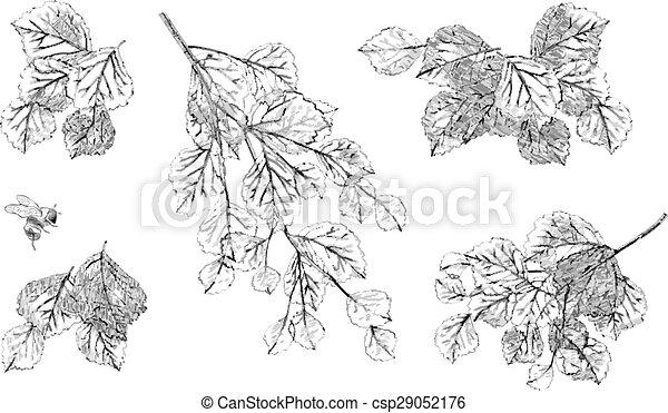 Tree branch leaves vector set - csp29052176