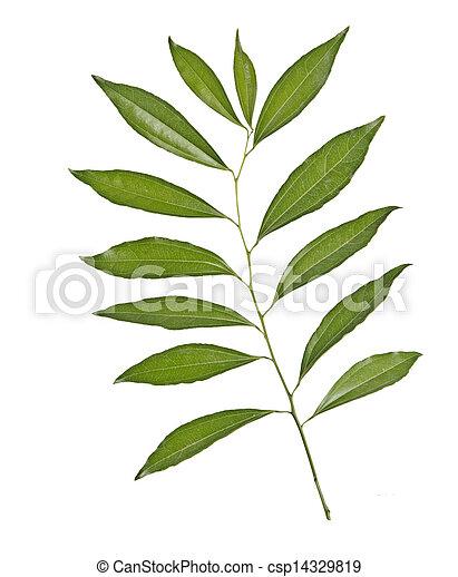 Tree branch - csp14329819