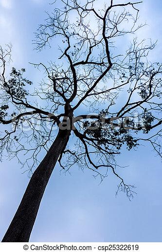 tree branch - csp25322619