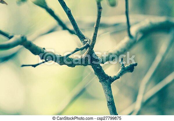 Tree branch - csp27799875