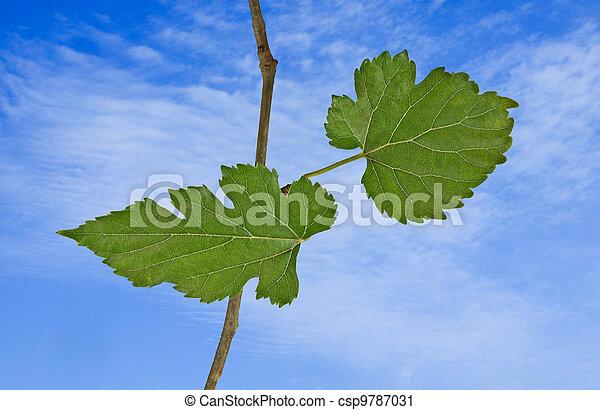 Tree branch - csp9787031
