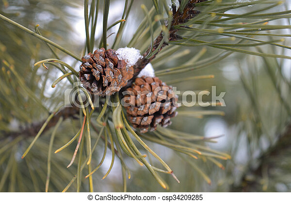 Tree Branch - csp34209285