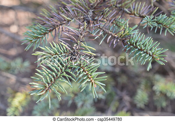 Tree Branch - csp35449780