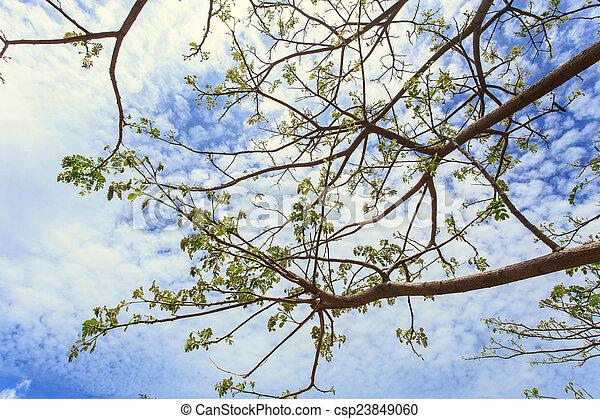 Tree branch - csp23849060