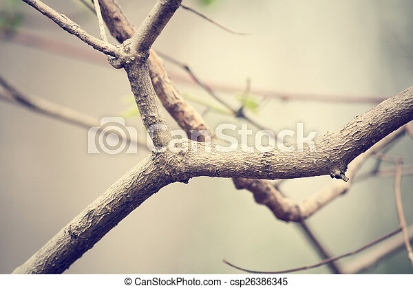 Tree branch - csp26386345
