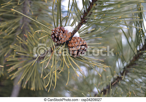 Tree Branch - csp34209027