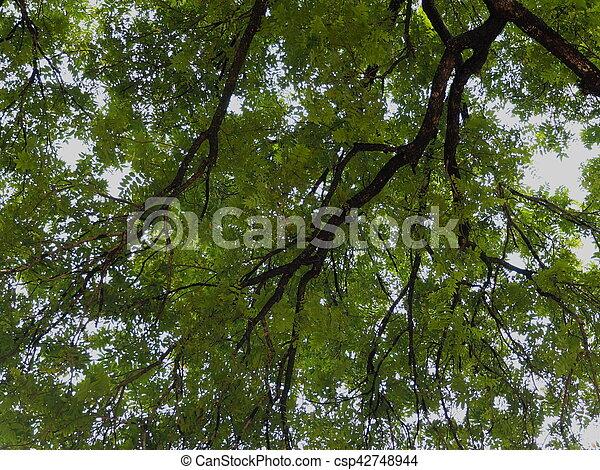 Tree branch. - csp42748944