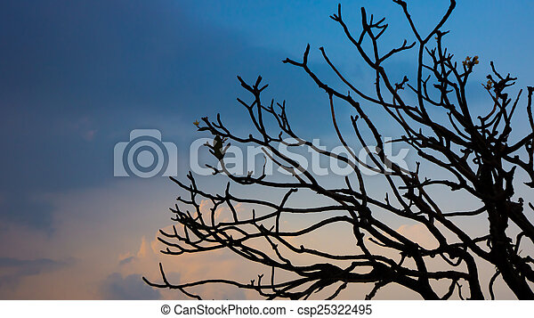 tree branch - csp25322495