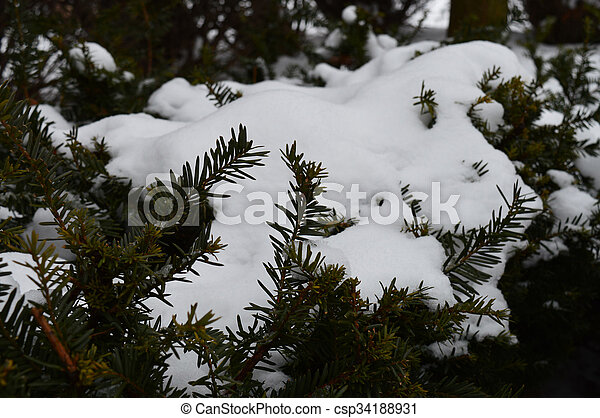 Tree branch - csp34188931