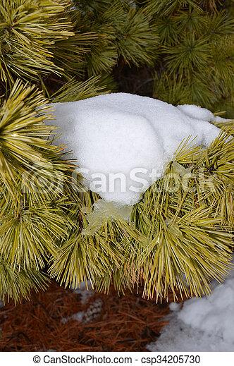 Tree branch - csp34205730