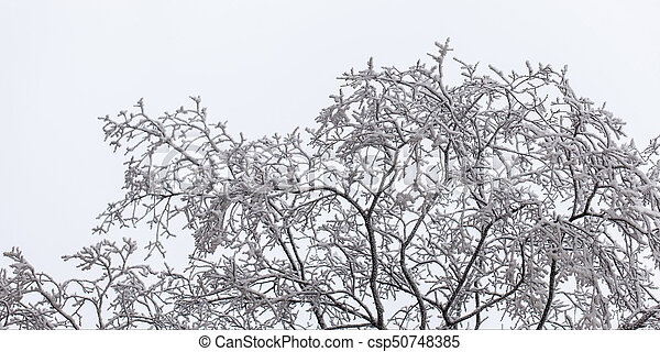 tree branches in frost - csp50748385