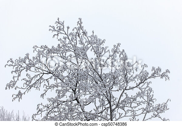 tree branches in winter - csp50748386