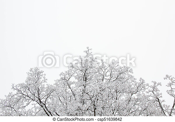 tree branches on a snowy day in the winter forest - csp51639842