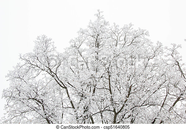 tree branches on a snowy day in the winter forest - csp51640805