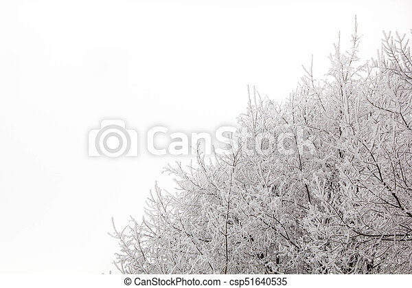 tree branches on a snowy day in the winter forest - csp51640535