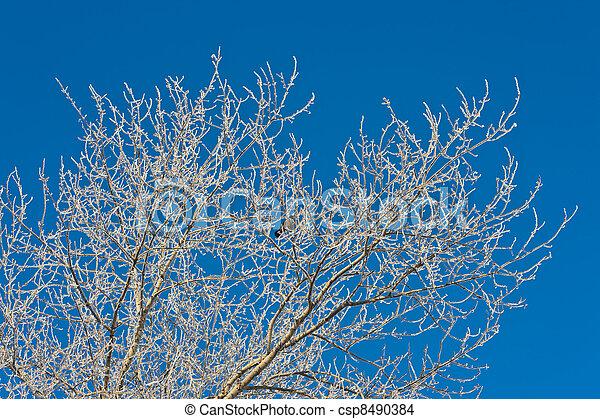 Tree branches - csp8490384