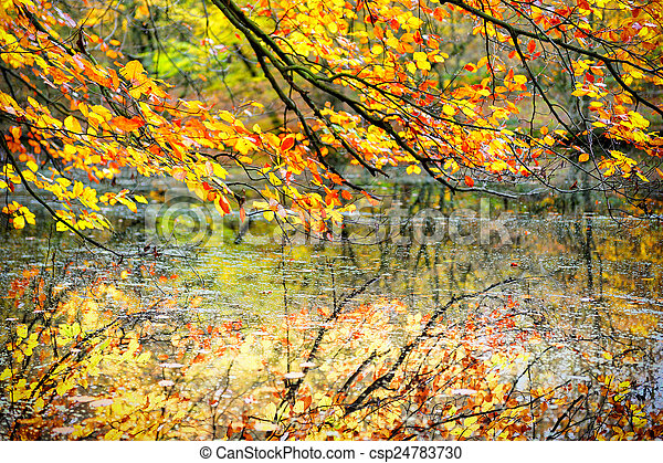 Tree branches with autumn leaves - csp24783730