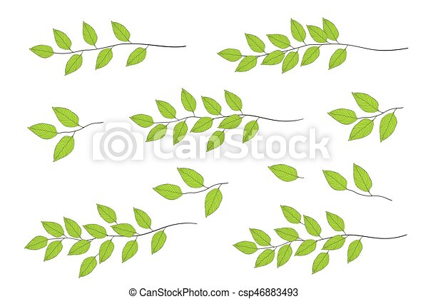 tree branches with green leaves - csp46883493