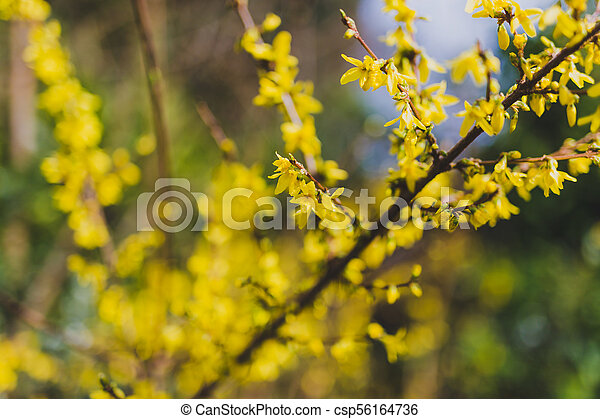 Tree Branches With Small Yellow Flowers Shot At Extremely Shallow