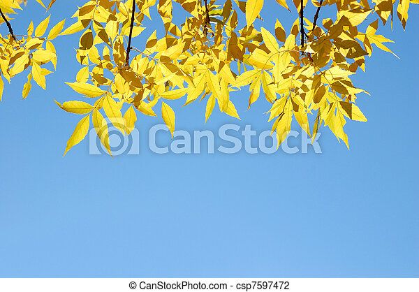 Tree branches with yellow autumn leaves on blue sky background - csp7597472