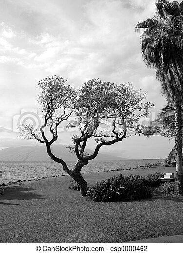 Tree by the Ocean - csp0000462