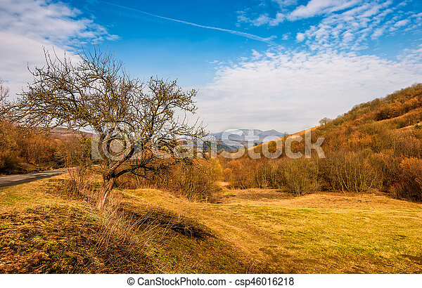 tree by the road in mountains in springtime - csp46016218