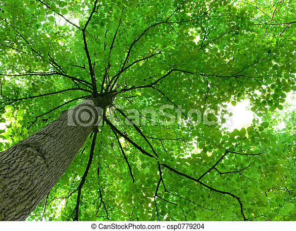 Tree Canopy - csp0779204
