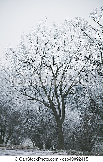 tree covered with frost - csp43092415