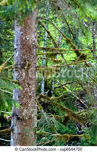 tree, covered with moss - csp6544750