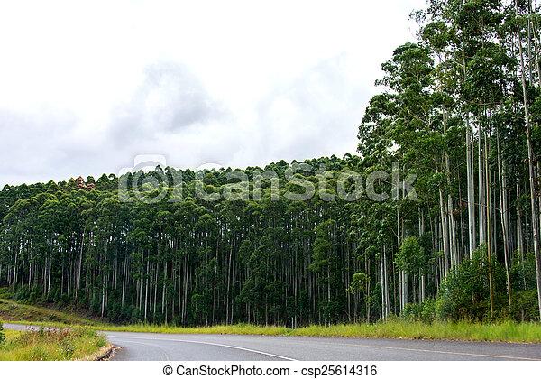 Tree Farm - csp25614316
