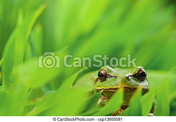 tree frog - csp13655091