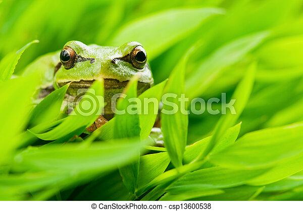 tree frog - csp13600538