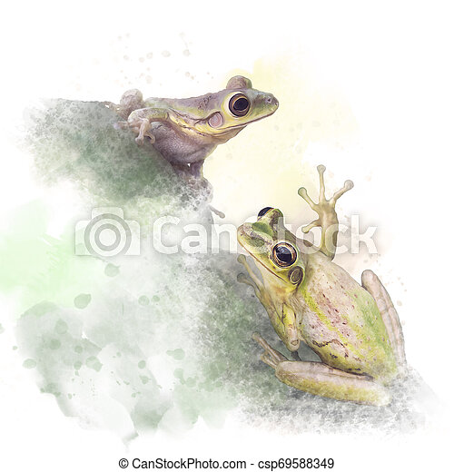 Tree Frogs watercolor on white background - csp69588349