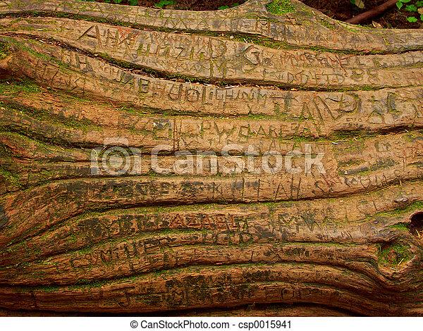 Tree Graffiti - csp0015941