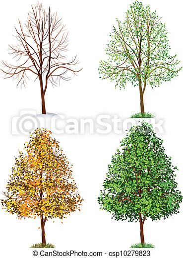 Tree - csp10279823