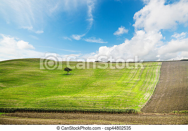 tree in a green hill in Tuscany - csp44802535
