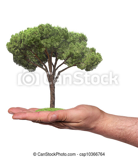 tree in a hand, isolated - csp10366764