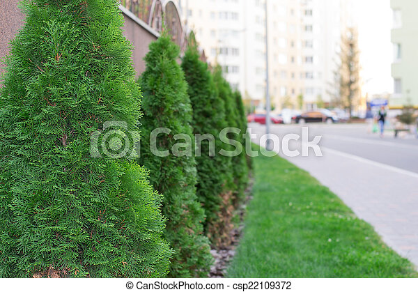 tree in a residential area - csp22109372