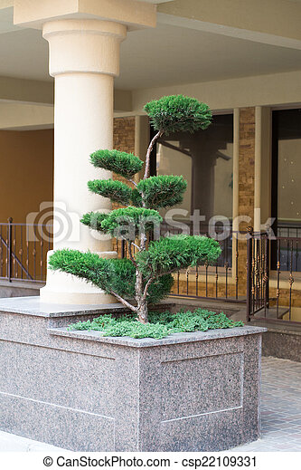 tree in a residential area - csp22109331