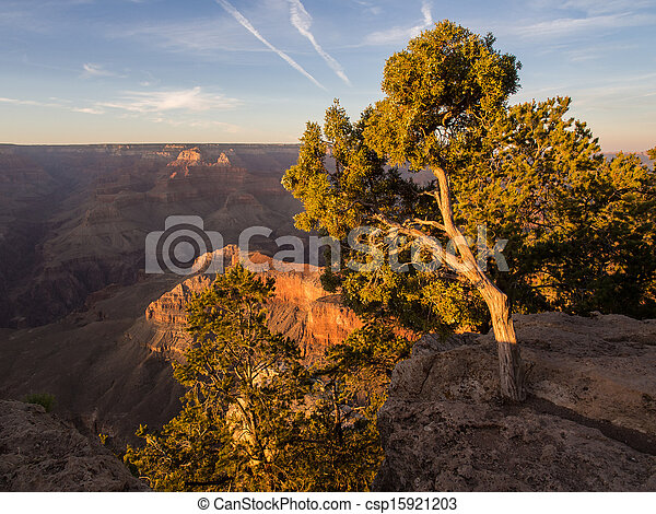Tree in Evening in Grand Canyon - csp15921203