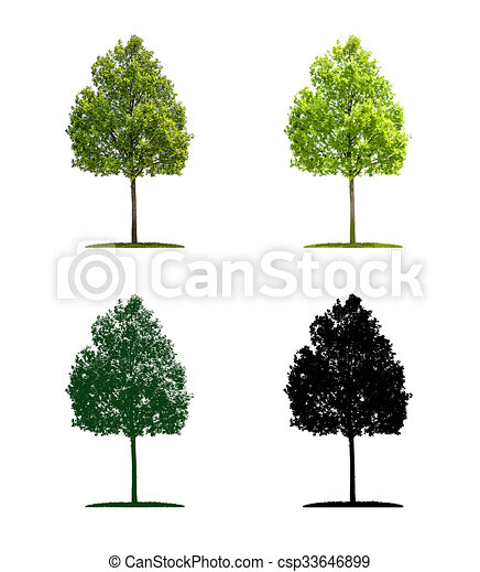 Tree in four different illustration techniques - Young oak tree - csp33646899