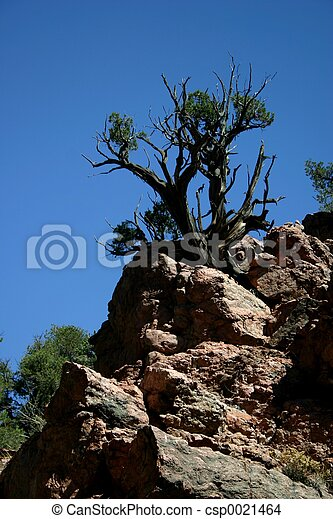 Tree in Granite - csp0021464