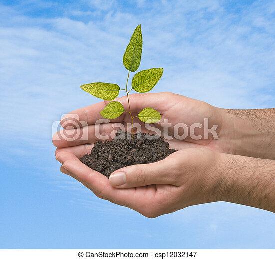 tree in hands - csp12032147