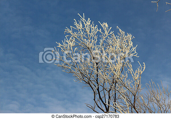 Tree in hoarfrost against the sky - csp27170783