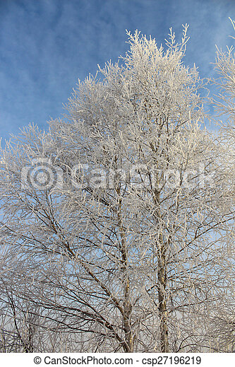 Tree in hoarfrost - csp27196219