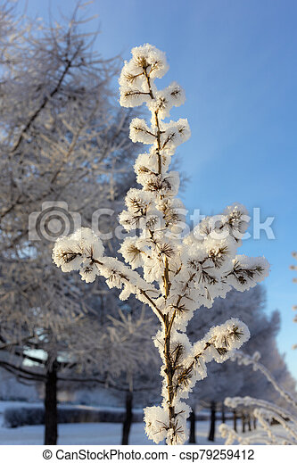 tree in hoarfrost - csp79259412