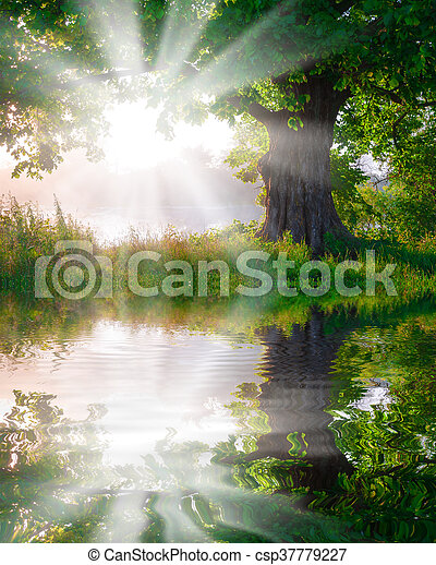 Tree in the meadow in the mist with sunlight reflected on the River. - csp37779227