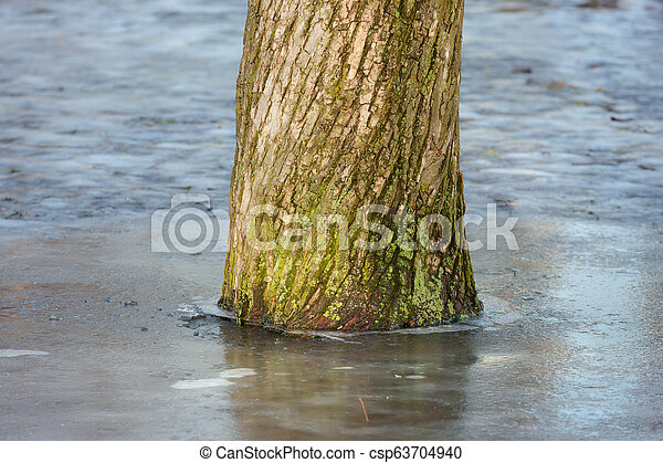 tree in the park - csp63704940