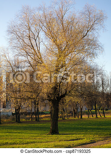 tree in the park - csp87193325