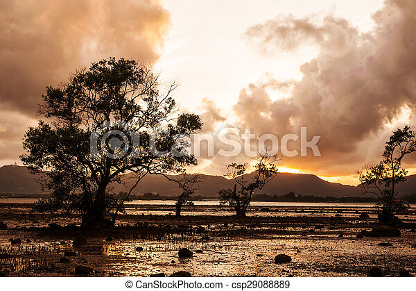 Tree in the sea with color of sunset and storm cloud - csp29088889